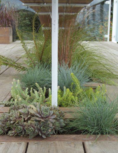 july-floral-sedum-grass-planting