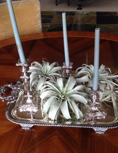 july-floral-xerographica-airplant-styling