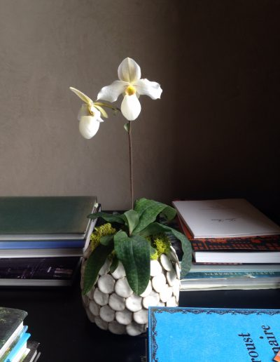 july-floral-white-lady-slipper-orchid-pot