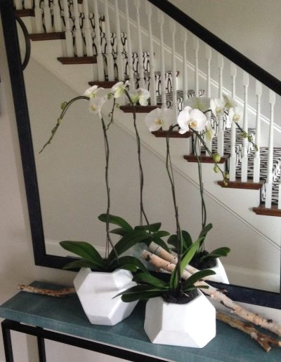 july-floral-white-phalaenopsis-pots