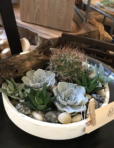 july-floral-cactus-and-succulent-planter-tirto-furniture