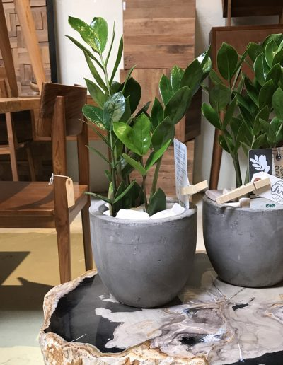 july-floral-zzplant-tirto-furniture