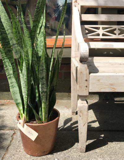 july-floral-snake-plant-tirto-furniture