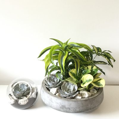 july-floral-echeveria-pepperomia-dracena-cement-planter